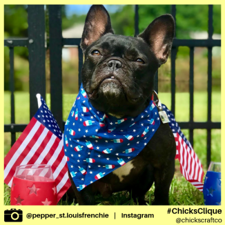 pepper_st.louisfrenchie (9)