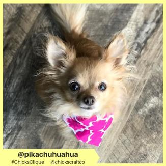 pikachuhuahua