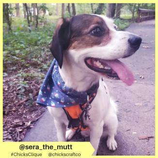 sera_the_mutt (8)