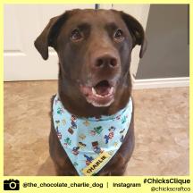 the_chocolate_charlie_dog