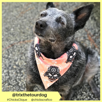 trixthetourdog (10)