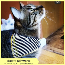 catt_schwartz (4)
