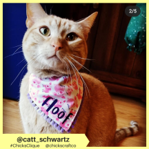 catt_schwartz (5)
