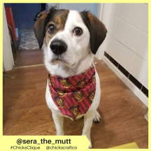sera_the_mutt