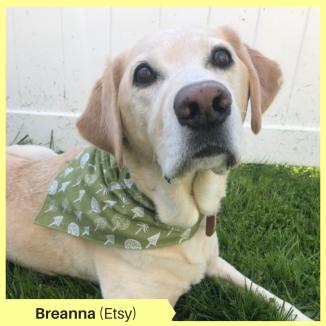 Breanna (Etsy)
