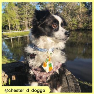 chester_d_doggo (2)