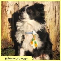 chester_d_doggo (3)