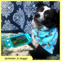chester_d_doggo (4)