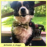 chester_d_doggo (5)