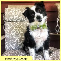 chester_d_doggo (6)