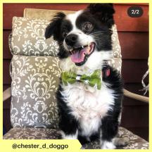 chester_d_doggo (7)