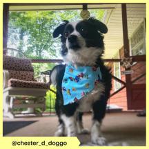 chester_d_doggo (8)