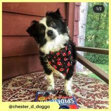 chester_d_doggo (9)