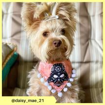 daisy_mae_21