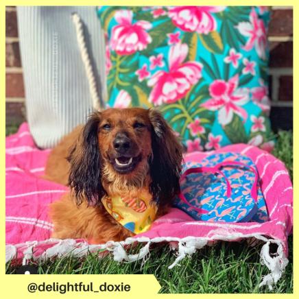 delightful_doxie (13)