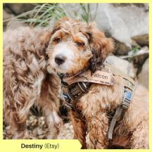 Destiny V Etsy