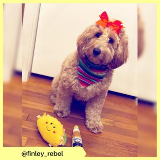 finley_rebel (2)
