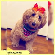 finley_rebel