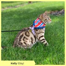 Kelly Etsy