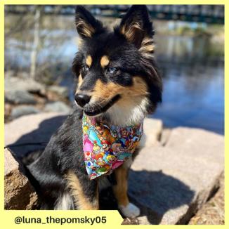 luna_thepomsky05
