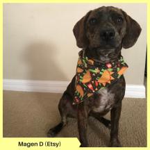Magen D (Etsy)