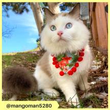 mangoman5280 (2)