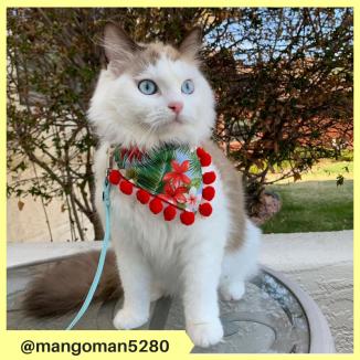 mangoman5280 (4)