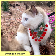 mangoman5280 (9)