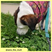 sera_the_mutt (2)