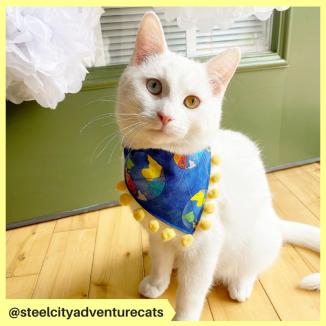 steelcityadventurecats (2)