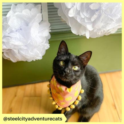 steelcityadventurecats (3)