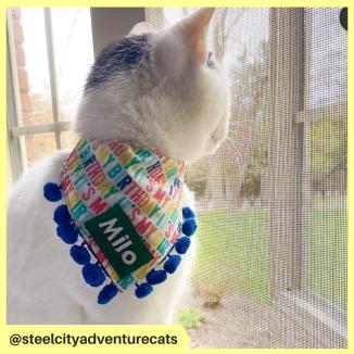 steelcityadventurecats (4)
