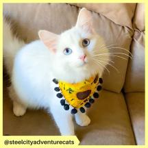 steelcityadventurecats (5)