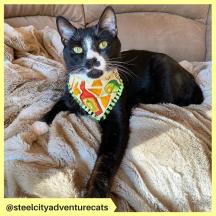 steelcityadventurecats (6)