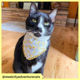 steelcityadventurecats (7)