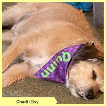 Charli H Etsy