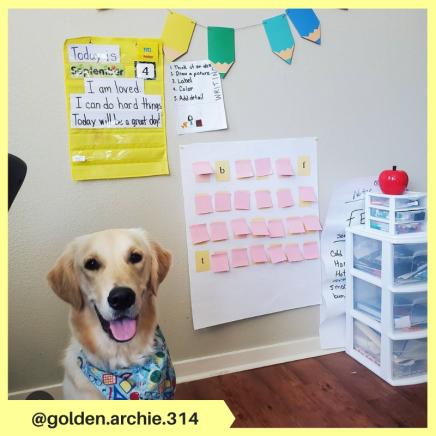 golden.archie.314