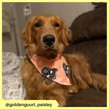 goldenguurl_paisley