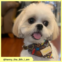 henry_the_8th_i_am