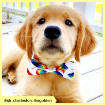 sir_charleston_thegolden (3)