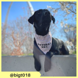 bigt018