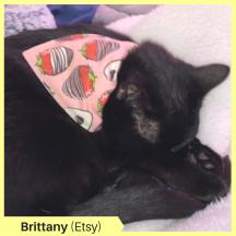 Brittany C Etsy
