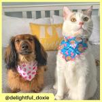 delightful_doxie