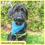 doodles_layandmags