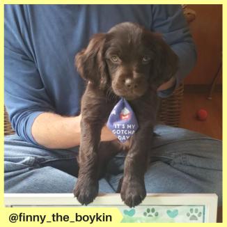 finny_the_boykin (2)