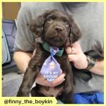 finny_the_boykin