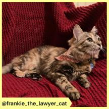 frankie_the_lawyer_cat