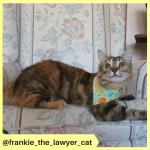 frankie_the_lawyer_cat (2)