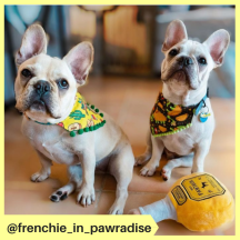 frenchie_in_pawradise (2)
