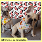 frenchie_in_pawradise